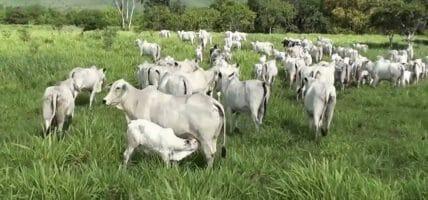Brasile, frena la carne: JBS e Minerva chiudono alcuni macelli
