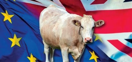 UK, carne e pelle (per ora) dicono che Brexit non sembra così male