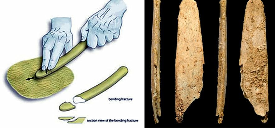 A study showcases how Neanderthals were meticulous tanners
