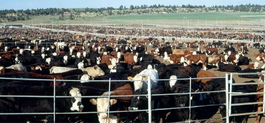 CRV brings worldwide meat on tilt