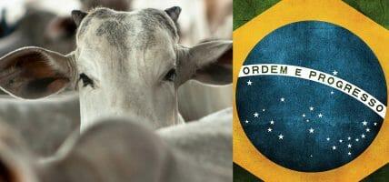 Brasile, la marchiatura a fuoco è un danno da 1 mld, dice la prof