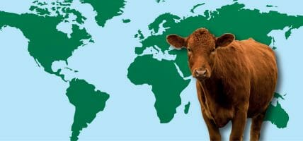The world reopens, the meat industry slows: Rabobank's analysis