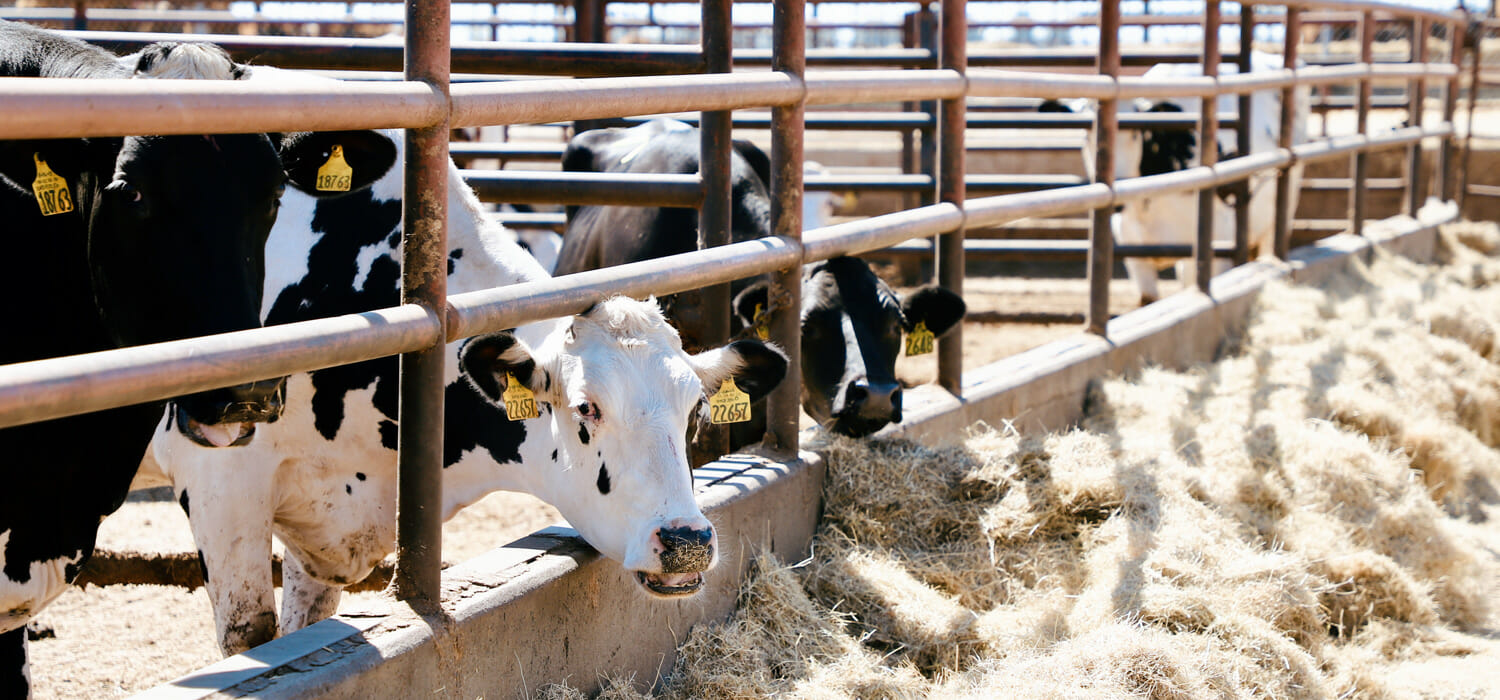 US Department of Justice investigates the four meat majors