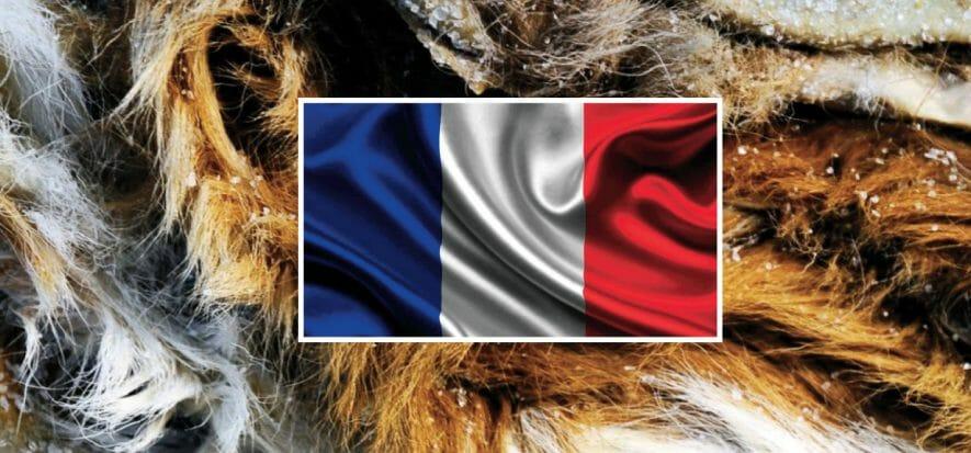 Francia, magazzini pieni di pelli grezze bloccate dal lockdown