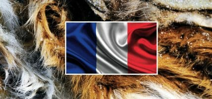 France: warehouses full of hides blocked by the lockdown