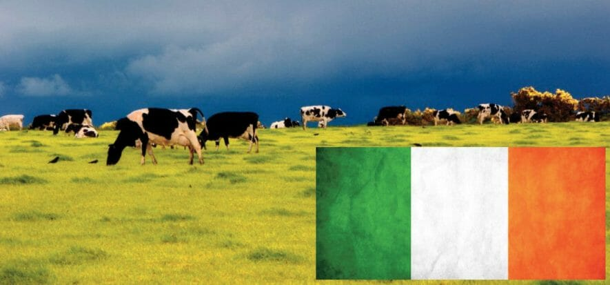 Good levels for Irish slaughterhouses: less volume, but not too much