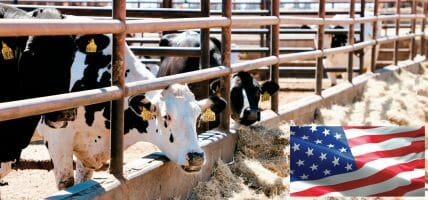 Nessun illecito: il trend dei prezzi USA della carne è regolare