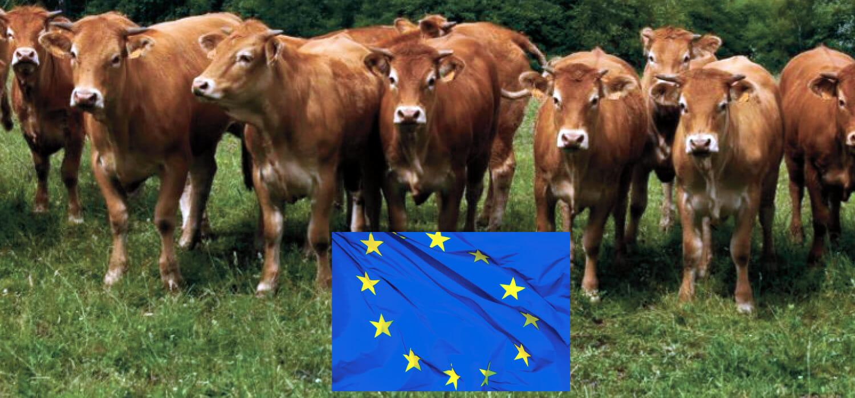Europa, carne bovina giù del 5% nei primi cinque mesi del 2020
