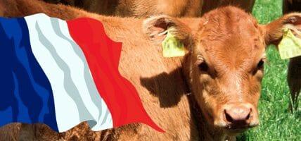 Nuova Aquitania, 10 milioni agli allevatori per una pelle migliore