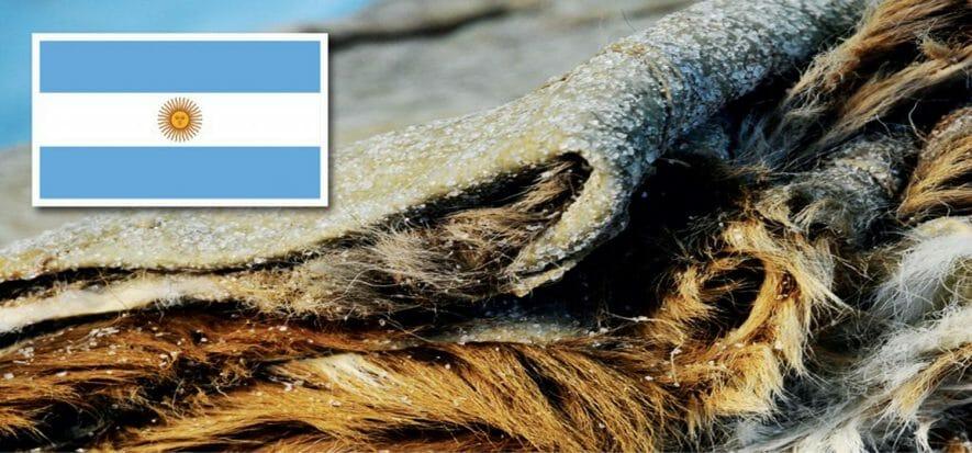 Argentina, dazio export della pelle sospeso fino a fine anno