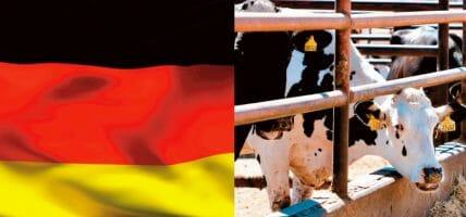 Germania, allevamenti pieni: i macelli obbligati agli straordinari