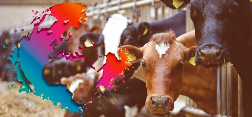Rabobank dice che il suino sarà protagonista del 2021 della carne