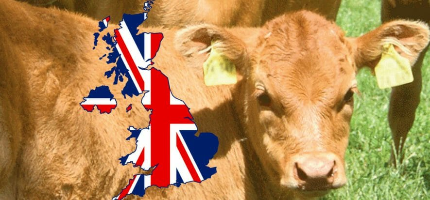 UK to start anti-CRV vaccination: meat calls for priority