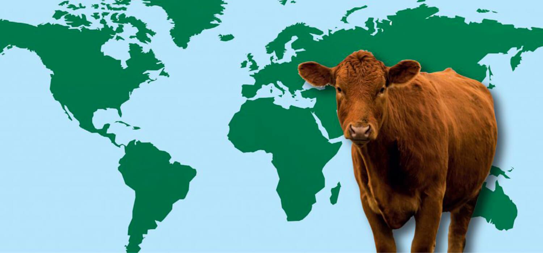 Il 2020 della carne: in Australia crolla, in Sud America vola