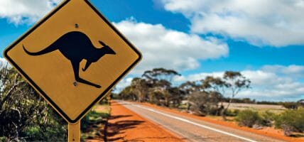 In USA vogliono vietare il commercio dei prodotti del canguro