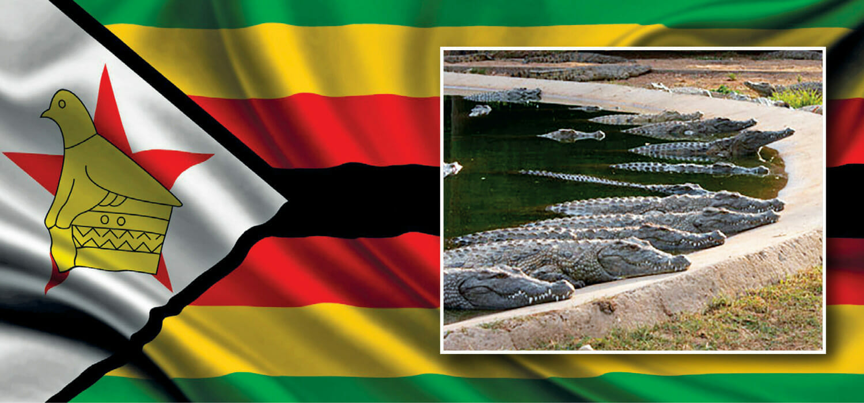 Zimbabwe, Covid frena la domanda di coccodrillo e Padenga fa -42%