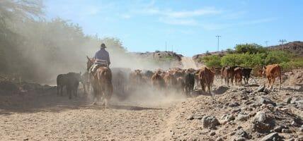 La carne argentina è meno competitiva, cala quella del Mato Grosso