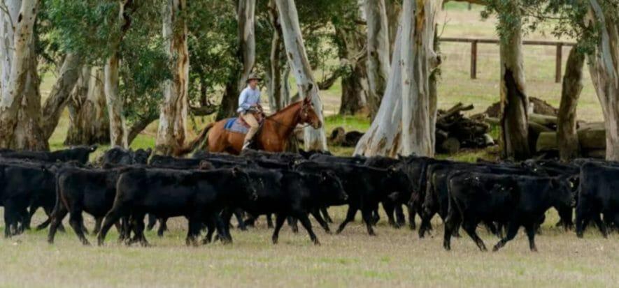 Carne, Australia e UK cercano un accordo: le imprese investono