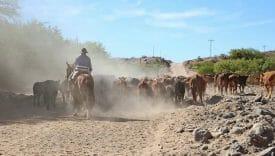 La carne argentina contro la proroga del blocco dell'export