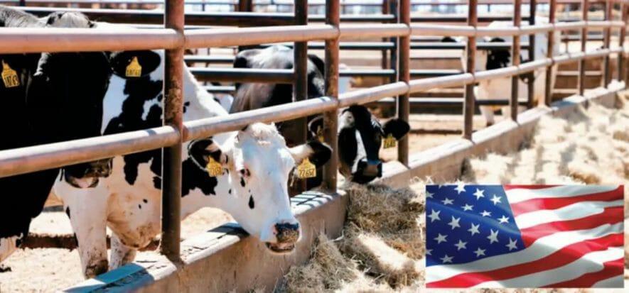 USDA, mezzo miliardo (e non solo) per la zootecnia indipendente