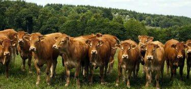 Il 2021 è stato fin qui un anno d'oro per la carne statunitense