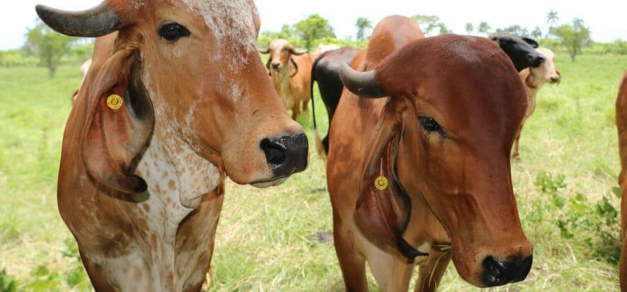 USDA stanzia 100 milioni per la capacità di lavorazione di carne